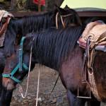 Смрадливи кончета в Кампаменто Чилено