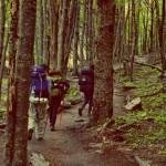 Из патагонската гора
