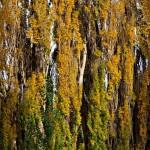 Дълбока патагонска есен