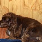 Старикът Томи край печката в стаята ми, неговото любимо място